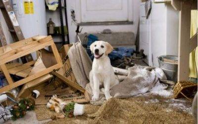 Managing your dog's environment